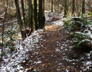 Advent/Christmas Worship Series: Go Where I Send Thee