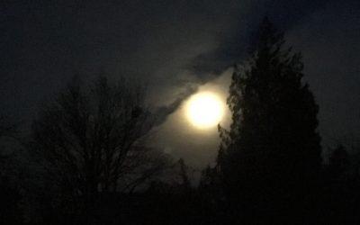 Silent Night/7 o'clock News headlines