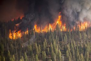 Special Offering for November – Pacific Northwest Wildfire Victims